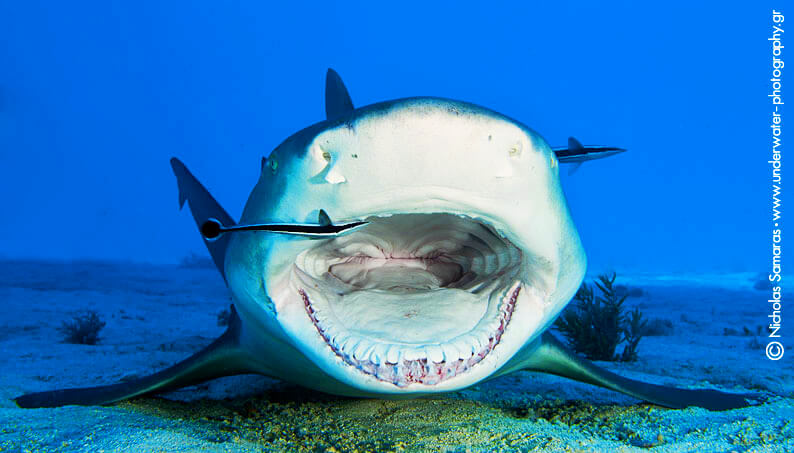 Underwater photography by greek photographer nicholas samaras nicholas samaras underwater photography greece sharks publicscrutiny Image collections