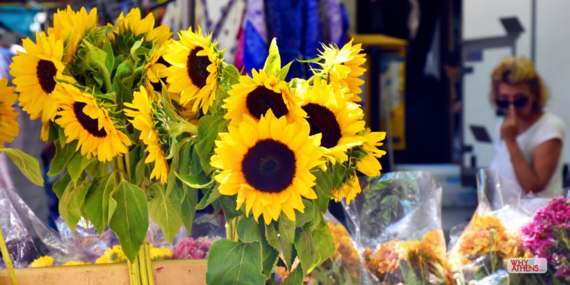 Photo Stories Athens Sunflower Mythology
