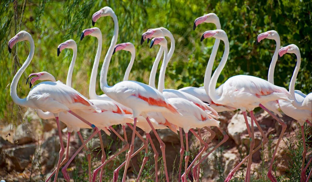 Athens Greece for Kids Athens Zoo Flamingos